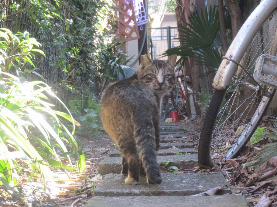 自称猫好きだが野良猫はダメ