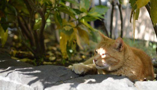 今日は暑いから木陰でのんびりにゃ~