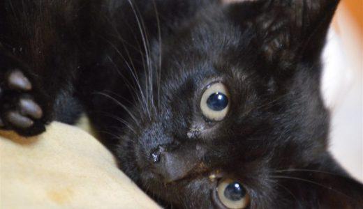 黒猫むずかしい