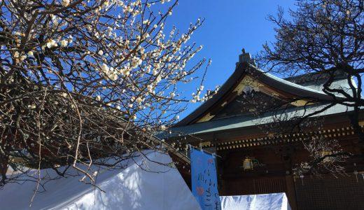 湯島天満宮は梅な季節で