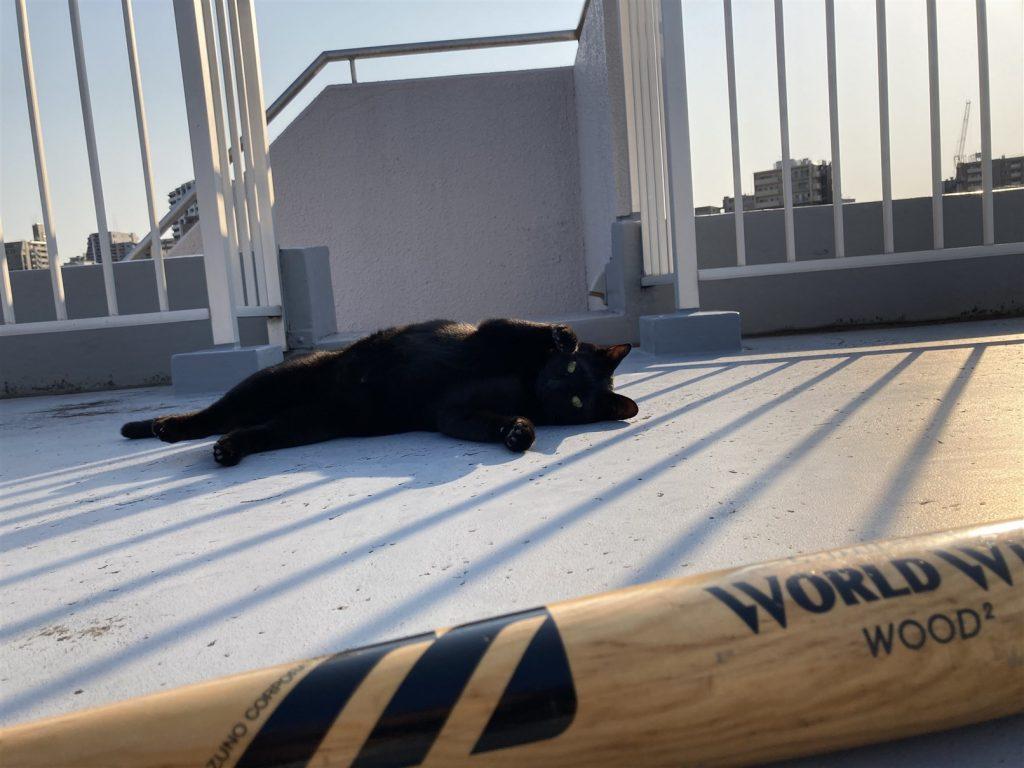 ネコとバットと屋上と